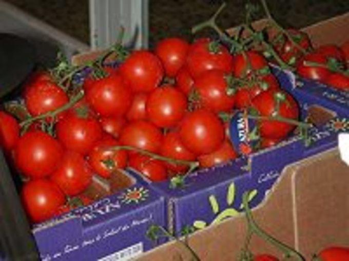 Het is weer tijd voor tomaten